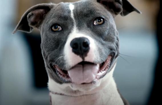 Canine Intervention (Netflix)