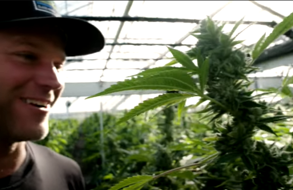 Going to Pot: The High & Low Of It (Paramount+)