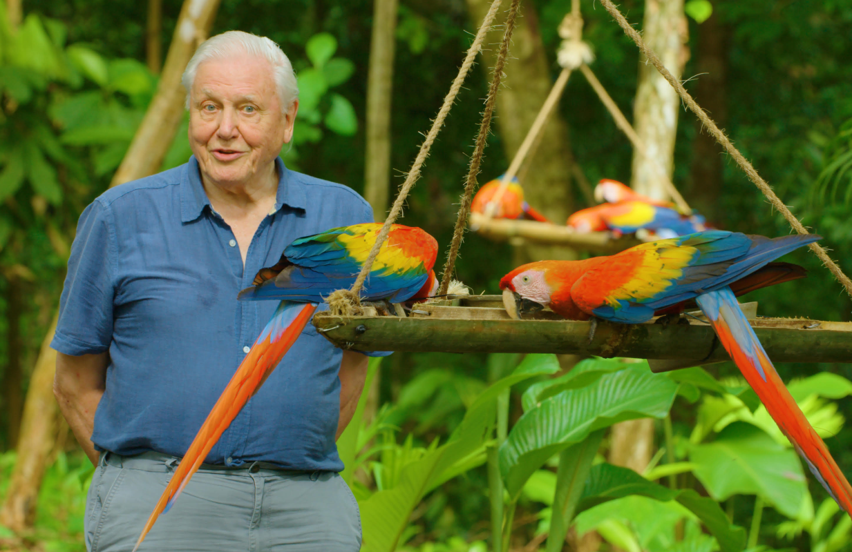 Sir David Attenborough in his new series Life in Color. (Photo: Netflix)