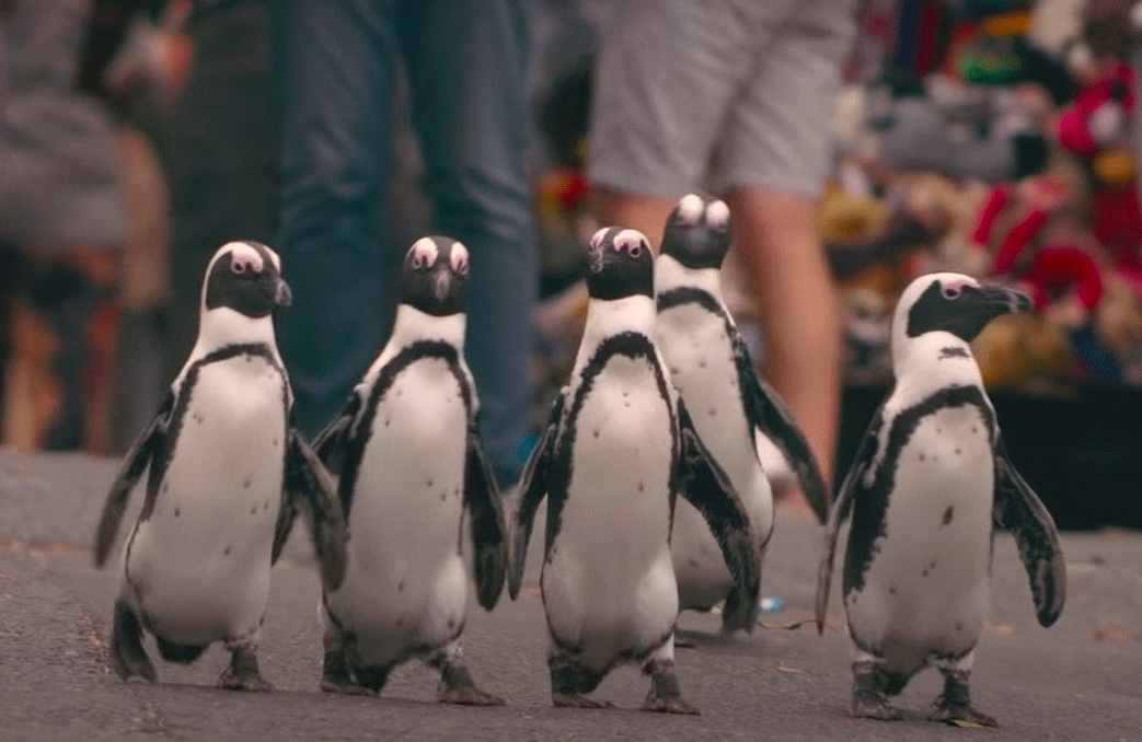 Every year a colony of African penguins takes over a small town in South Africa, where they mate and raise their young. (Photo: Netflix)