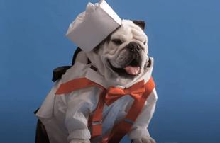 Pet Stars (Netflix)